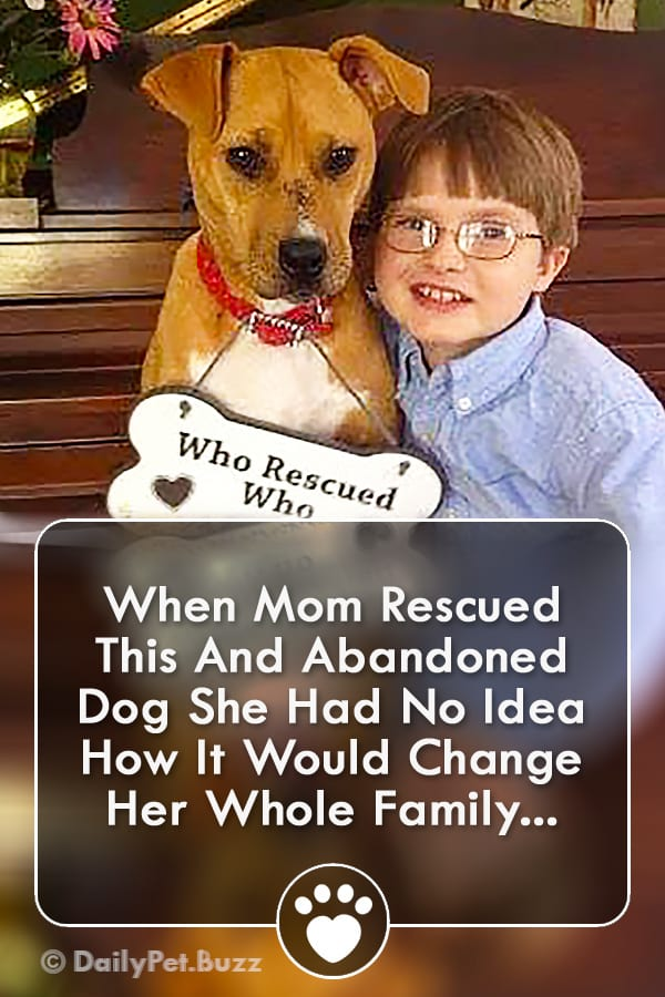 When Mom Rescued This And Abandoned Dog She Had No Idea How It Would Change Her Whole Family...