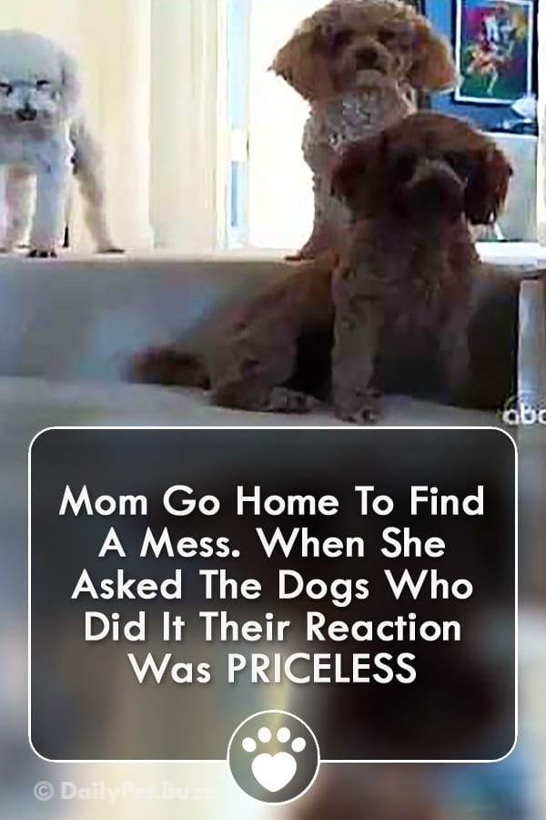 Mom Go Home To Find A Mess. When She Asked The Dogs Who Did It Their Reaction Was PRICELESS