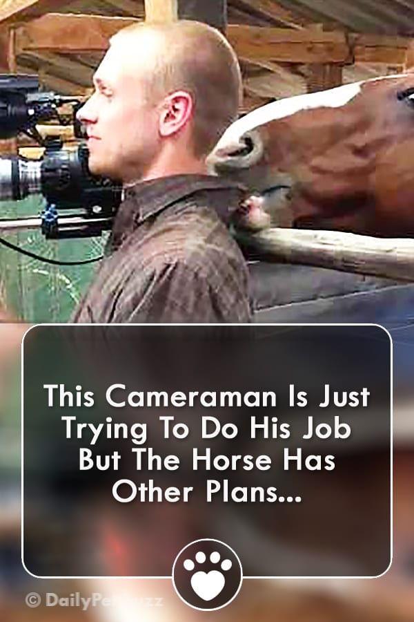 This Cameraman Is Just Trying To Do His Job But The Horse Has Other Plans...