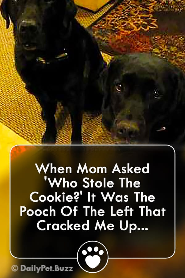 When Mom Asked \'Who Stole The Cookie?\' It Was The Pooch Of The Left That Cracked Me Up...