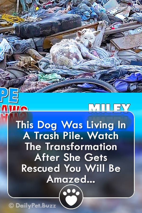 This Dog Was Living In A Trash Pile. Watch The Transformation After She Gets Rescued You Will Be Amazed...