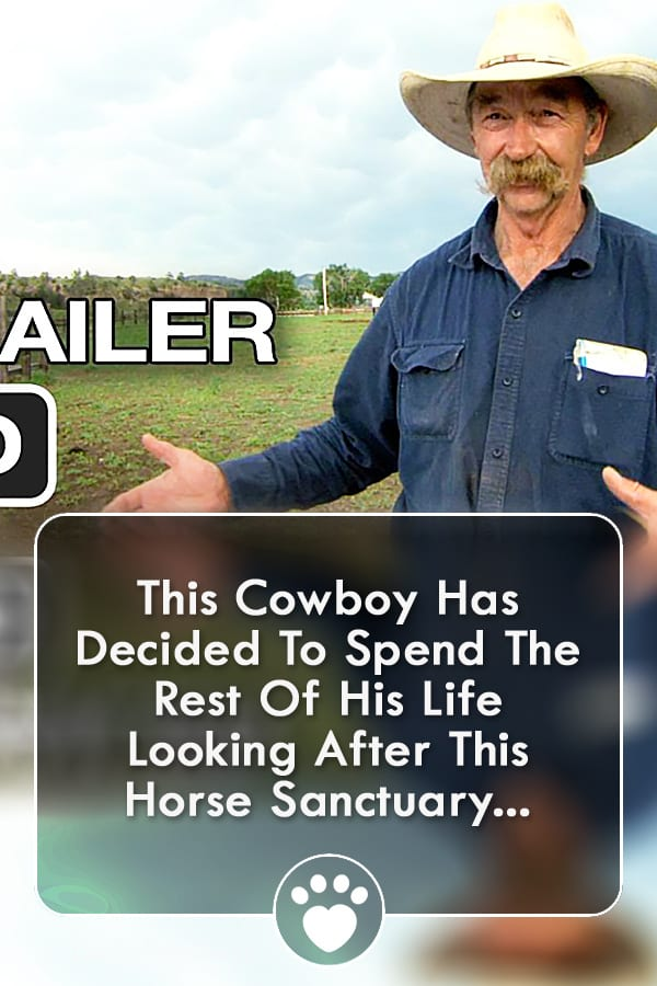 This Cowboy Has Decided To Spend The Rest Of His Life Looking After This Horse Sanctuary...