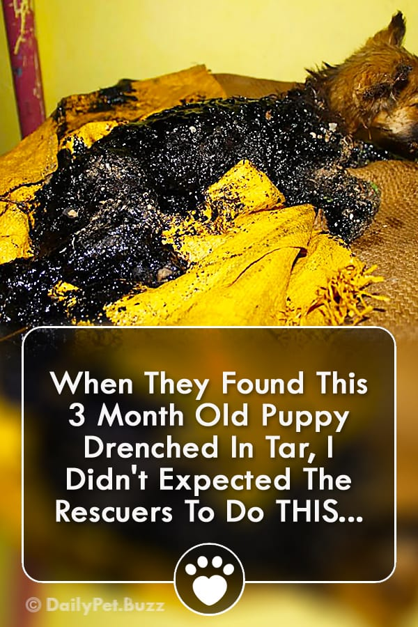 When They Found This 3 Month Old Puppy Drenched In Tar, I Didn\'t Expected The Rescuers To Do THIS...