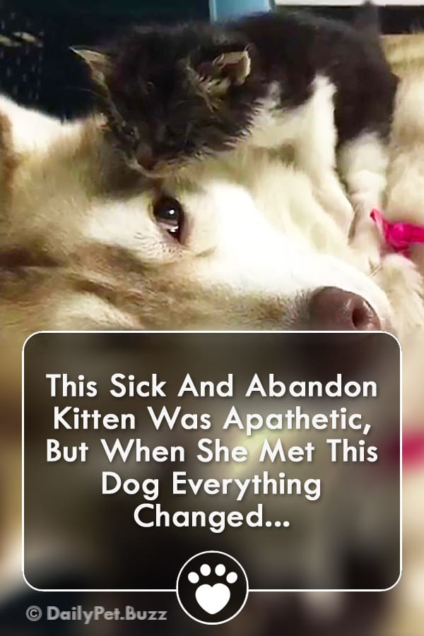 This Sick And Abandon Kitten Was Apathetic, But When She Met This Dog Everything Changed...