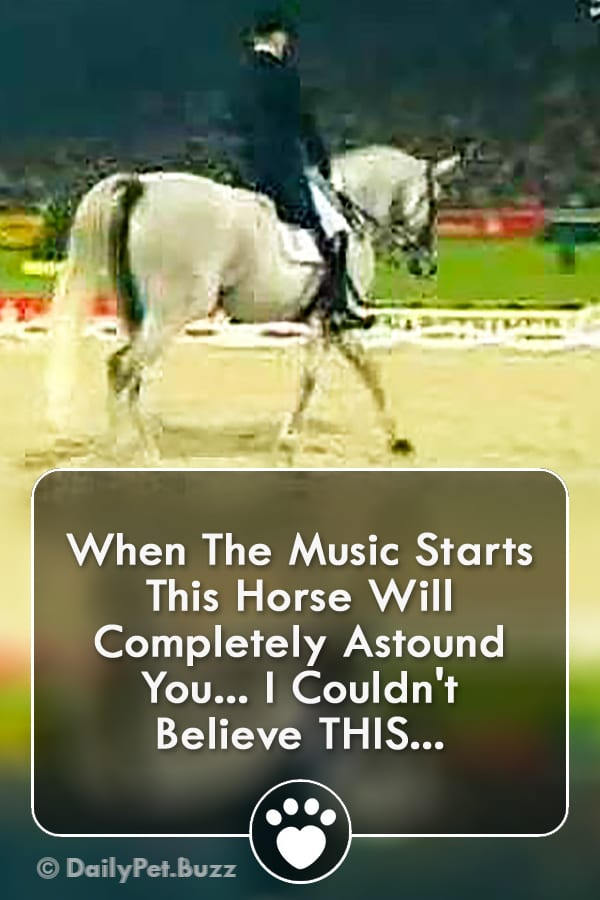 When The Music Starts This Horse Will Completely Astound You... I Couldn\'t Believe THIS...