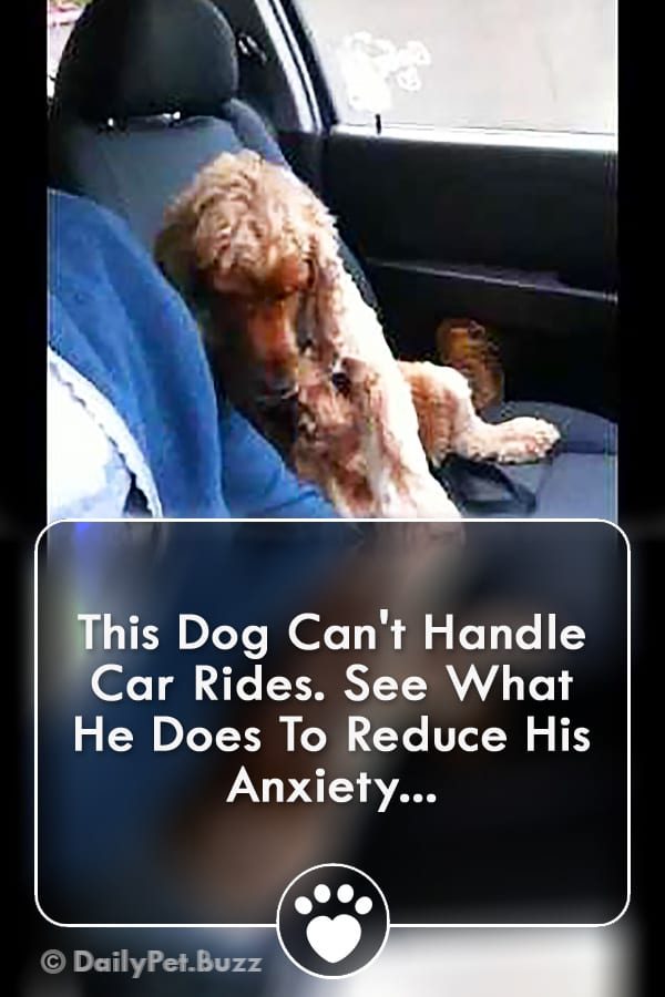 This Dog Can\'t Handle Car Rides. See What He Does To Reduce His Anxiety...