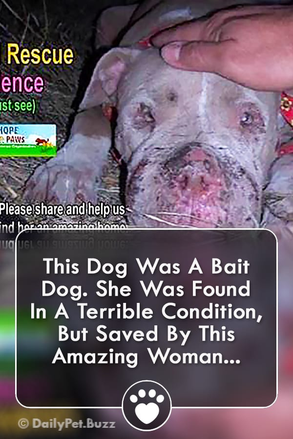 This Dog Was A Bait Dog. She Was Found In A Terrible Condition, But Saved By This Amazing Woman...