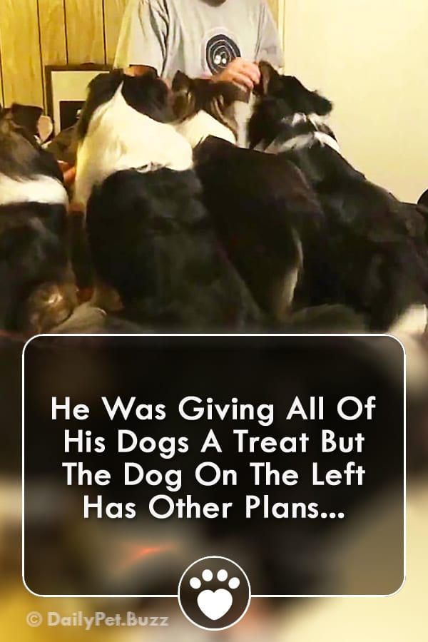 He Was Giving All Of His Dogs A Treat But The Dog On The Left Has Other Plans...