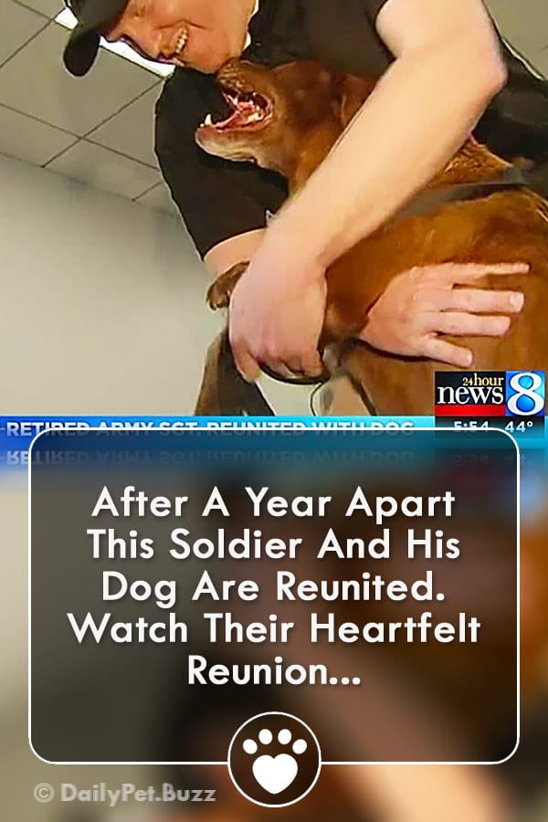 After A Year Apart This Soldier And His Dog Are Reunited. Watch Their Heartfelt Reunion...