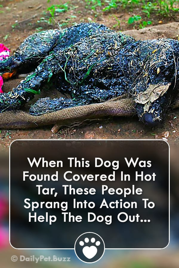 When This Dog Was Found Covered In Hot Tar, These People Sprang Into Action To Help The Dog Out...
