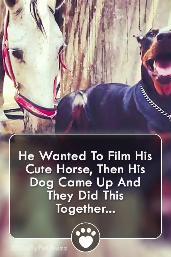 He Wanted To Film His Cute Horse, Then His Dog Came Up And They Did This Together...