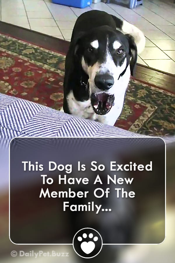 This Dog Is So Excited To Have A New Member Of The Family...