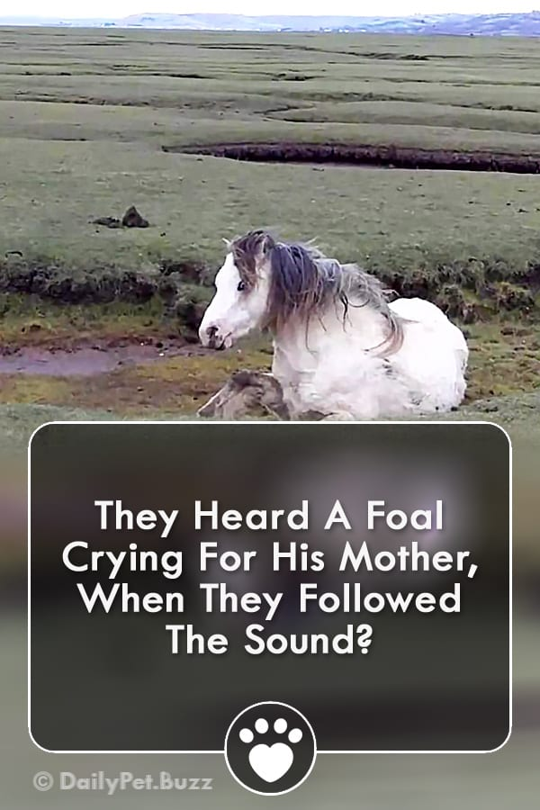 They Heard A Foal Crying For His Mother, When They Followed The Sound?