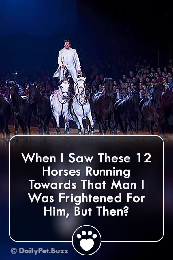 When I Saw These 12 Horses Running Towards That Man I Was Frightened For Him, But Then?