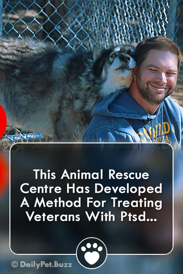 This Animal Rescue Centre Has Developed A Method For Treating Veterans With Ptsd...