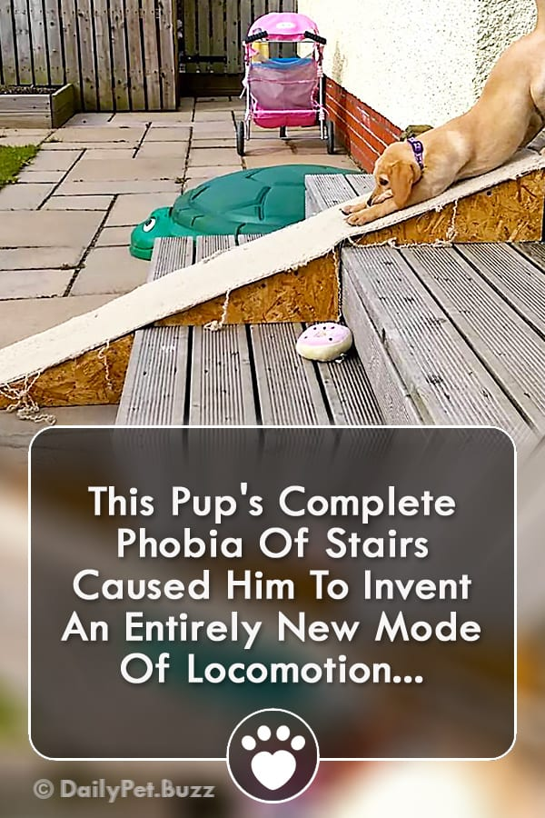 This Pup\'s Complete Phobia Of Stairs Caused Him To Invent An Entirely New Mode Of Locomotion...