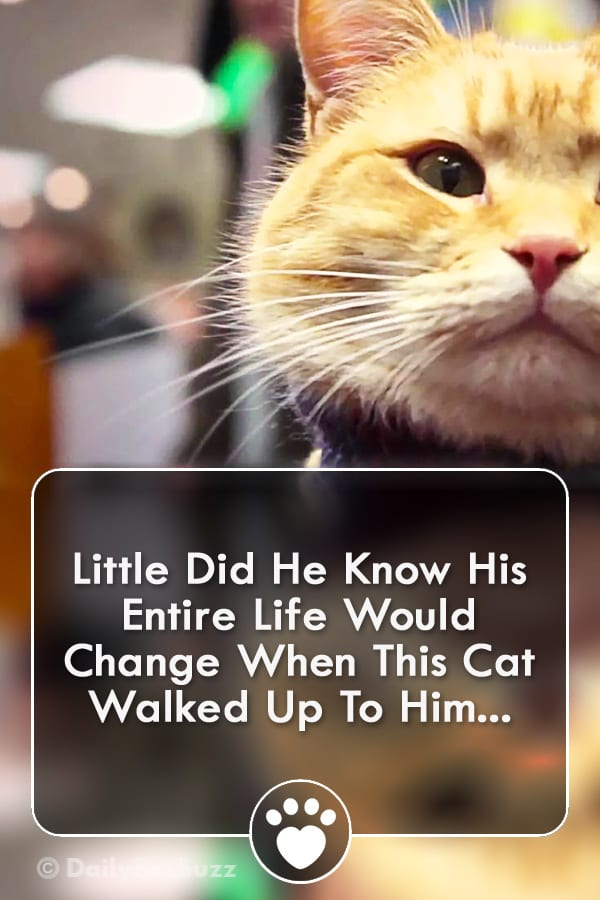 Little Did He Know His Entire Life Would Change When This Cat Walked Up To Him...