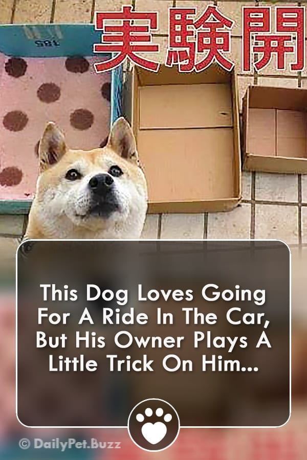 This Dog Loves Going For A Ride In The Car, But His Owner Plays A Little Trick On Him...