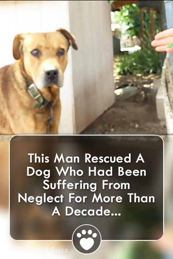This Man Rescued A Dog Who Had Been Suffering From Neglect For More Than A Decade...