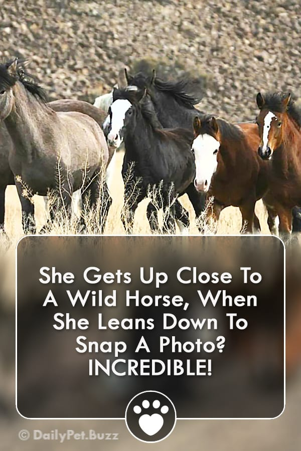 She Gets Up Close To A Wild Horse, When She Leans Down To Snap A Photo? INCREDIBLE!