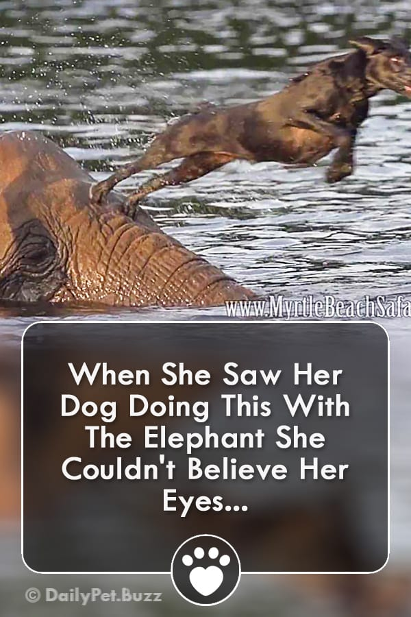When She Saw Her Dog Doing This With The Elephant She Couldn\'t Believe Her Eyes...