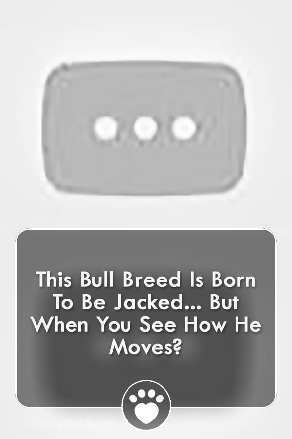 This Bull Breed Is Born To Be Jacked... But When You See How He Moves?