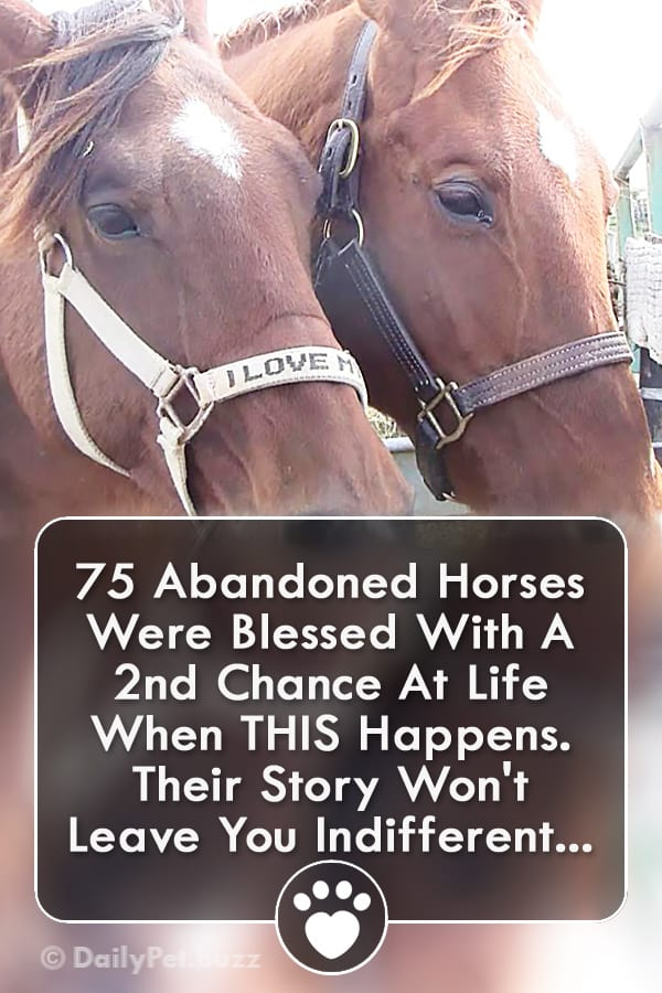 75 Abandoned Horses Were Blessed With A 2nd Chance At Life When THIS Happens. Their Story Won\'t Leave You Indifferent...