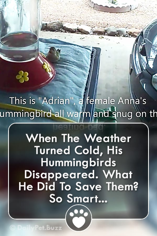 When The Weather Turned Cold, His Hummingbirds Disappeared. What He Did To Save Them? So Smart...