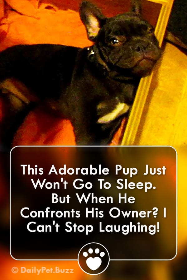 This Adorable Pup Just Won\'t Go To Sleep. But When He Confronts His Owner? I Can\'t Stop Laughing!