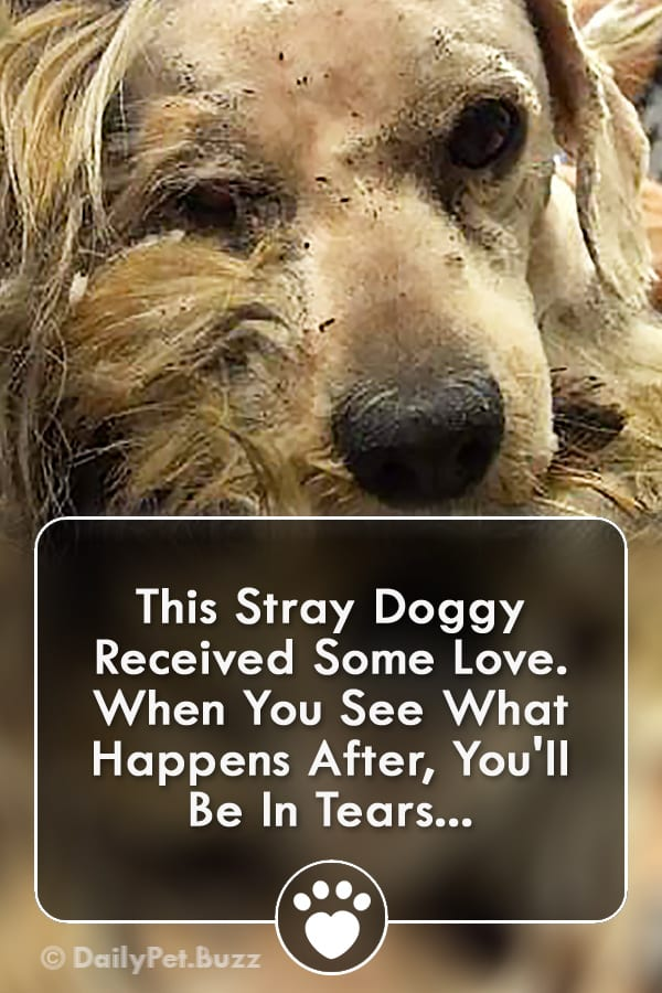 This Stray Doggy Received Some Love. When You See What Happens After, You\'ll Be In Tears...