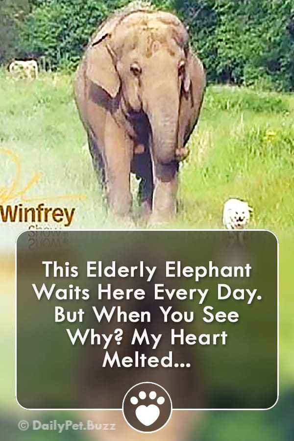 This Elderly Elephant Waits Here Every Day. But When You See Why? My Heart Melted...