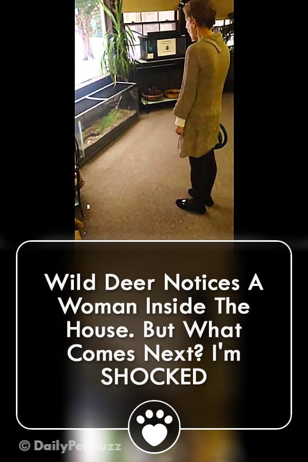 Wild Deer Notices A Woman Inside The House. But What Comes Next? I\'m SHOCKED