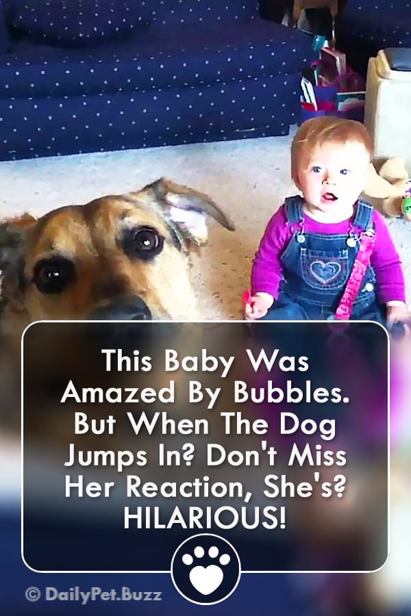 This Baby Was Amazed By Bubbles. But When The Dog Jumps In? Don\'t Miss Her Reaction, She\'s? HILARIOUS!