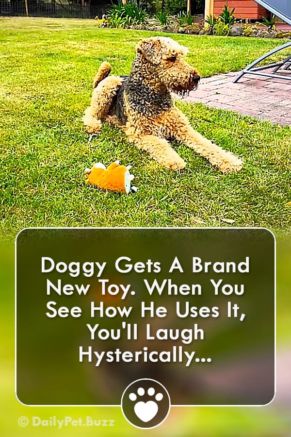 Doggy Gets A Brand New Toy. When You See How He Uses It, You\'ll Laugh Hysterically...
