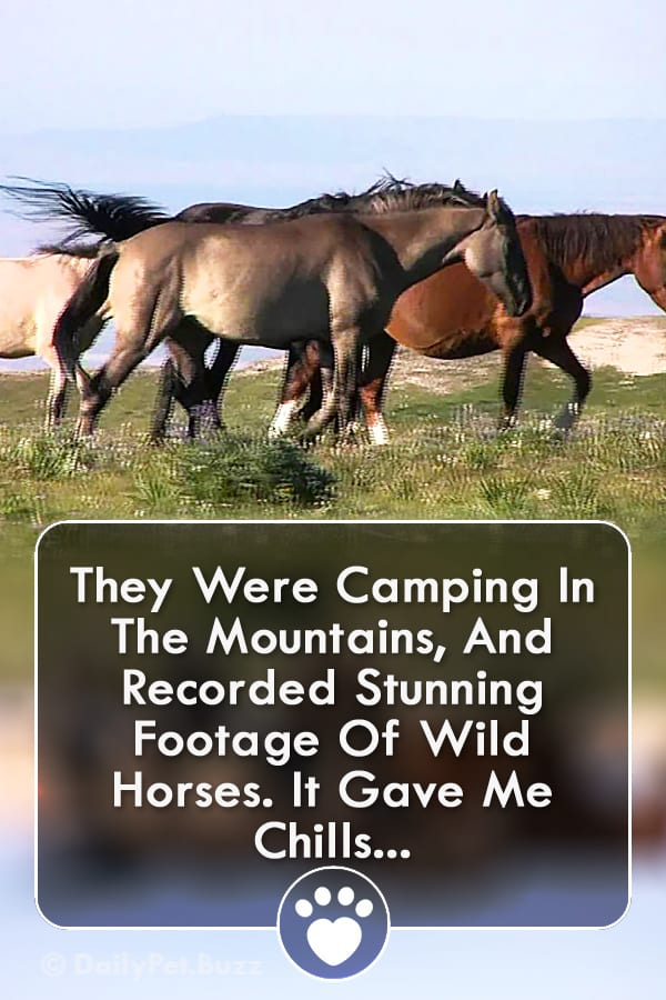 They Were Camping In The Mountains, And Recorded Stunning Footage Of Wild Horses. It Gave Me Chills...