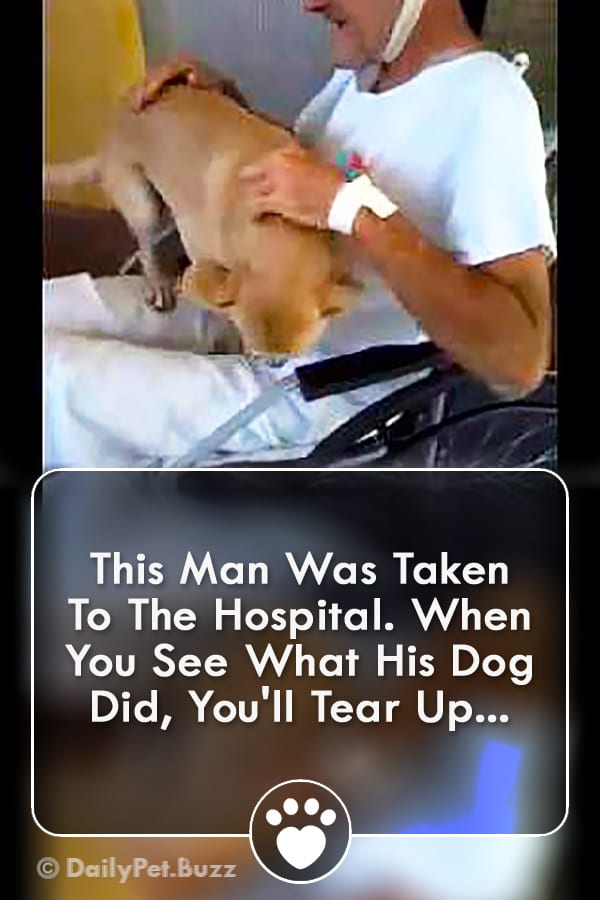 This Man Was Taken To The Hospital. When You See What His Dog Did, You\'ll Tear Up...