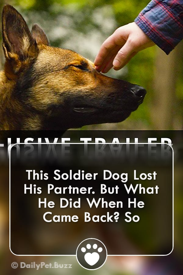 This Soldier Dog Lost His Partner. But What He Did When He Came Back? So