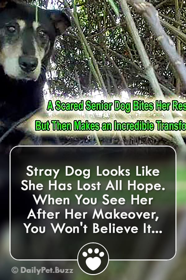 Stray Dog Looks Like She Has Lost All Hope. When You See Her After Her Makeover, You Won\'t Believe It...