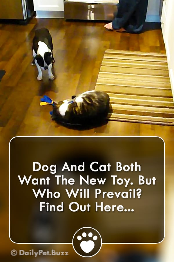 Dog And Cat Both Want The New Toy. But Who Will Prevail? Find Out Here...