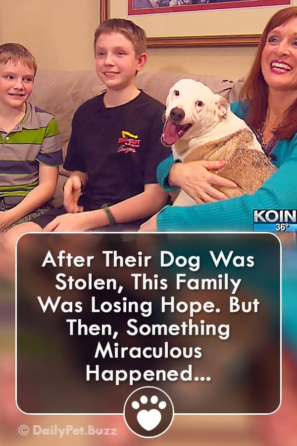 After Their Dog Was Stolen, This Family Was Losing Hope. But Then, Something Miraculous Happened...