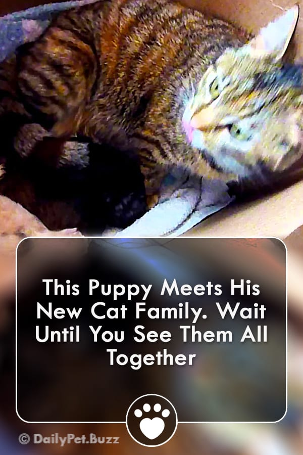 This Puppy Meets His New Cat Family. Wait Until You See Them All Together