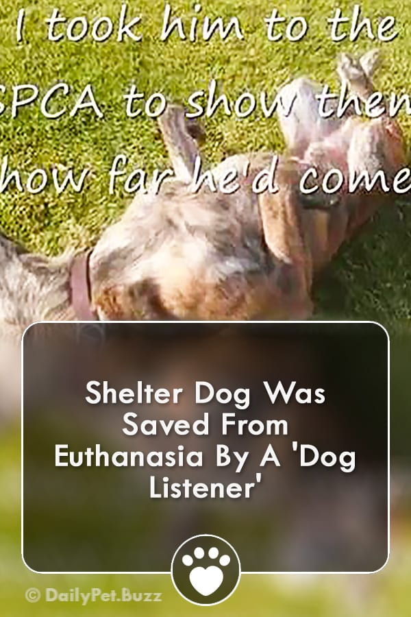Shelter Dog Was Saved From Euthanasia By A \'Dog Listener\'