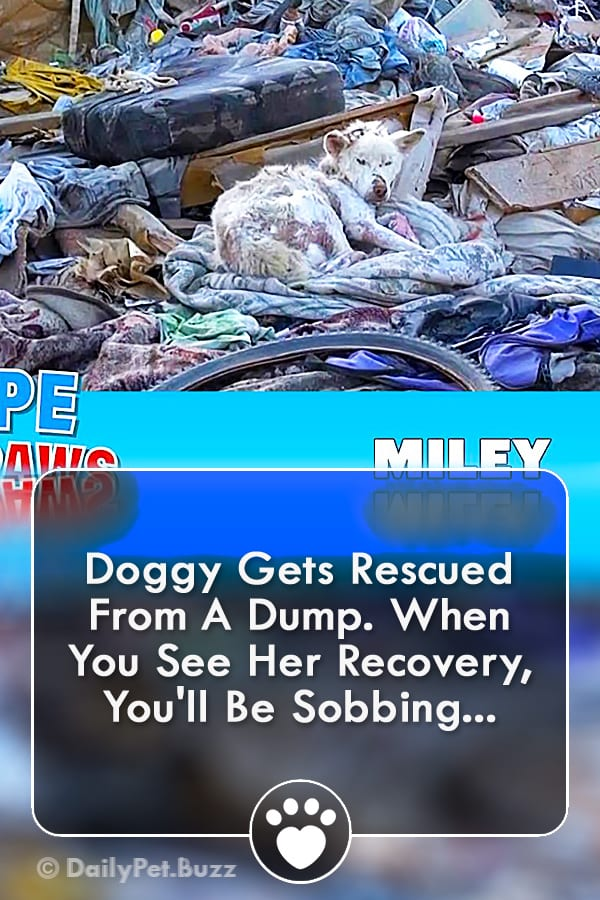 Doggy Gets Rescued From A Dump. When You See Her Recovery, You\'ll Be Sobbing...