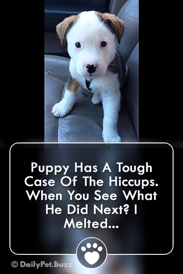 Puppy Has A Tough Case Of The Hiccups. When You See What He Did Next? I Melted...