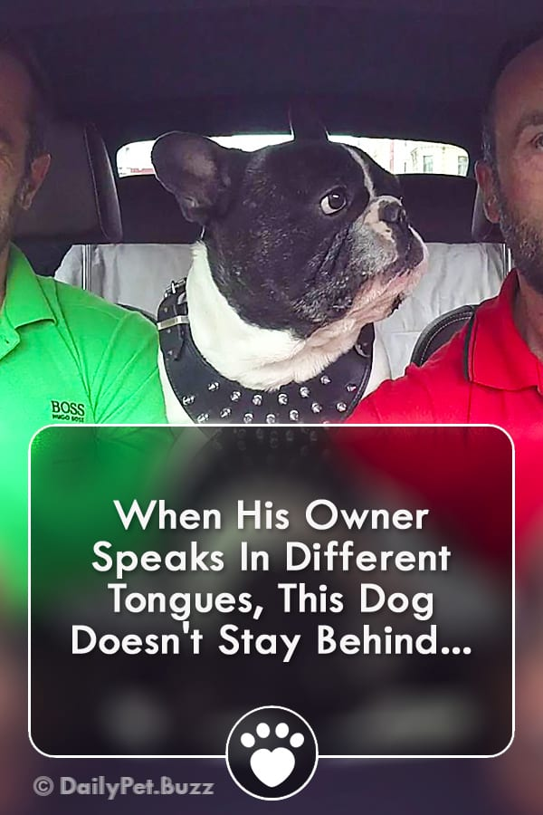 When His Owner Speaks In Different Tongues, This Dog Doesn\'t Stay Behind...
