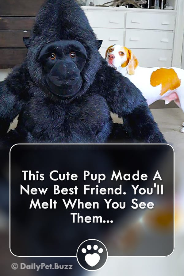 This Cute Pup Made A New Best Friend. You\'ll Melt When You See Them...