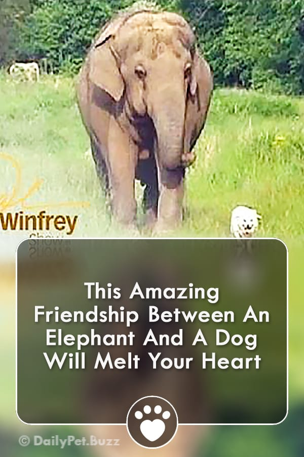 This Amazing Friendship Between An Elephant And A Dog Will Melt Your Heart