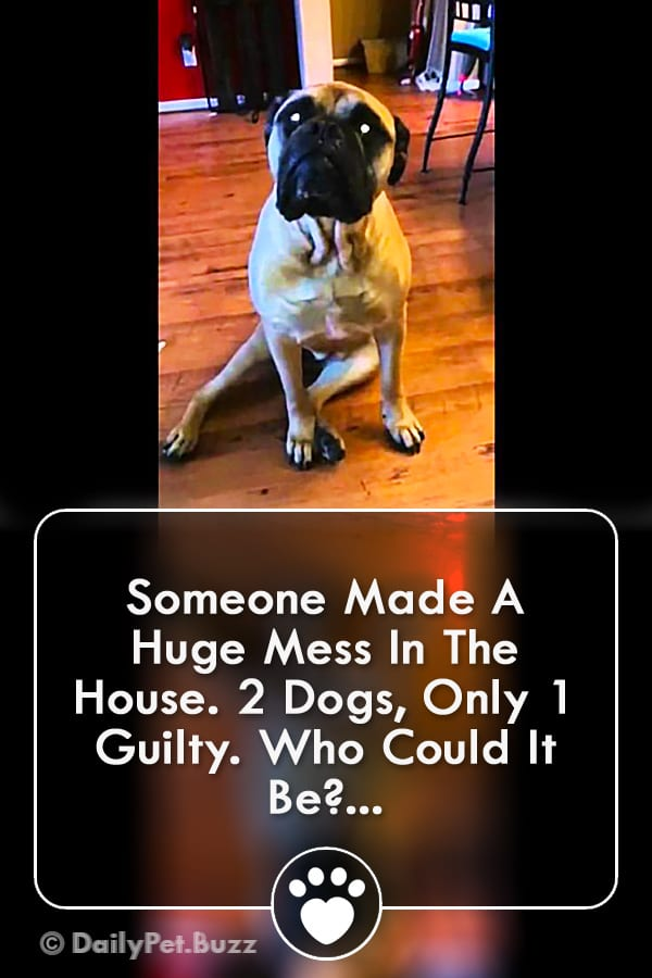 Someone Made A Huge Mess In The House. 2 Dogs, Only 1 Guilty. Who Could It Be?...