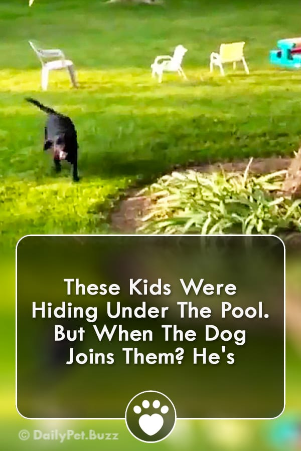 These Kids Were Hiding Under The Pool. But When The Dog Joins Them? He\'s