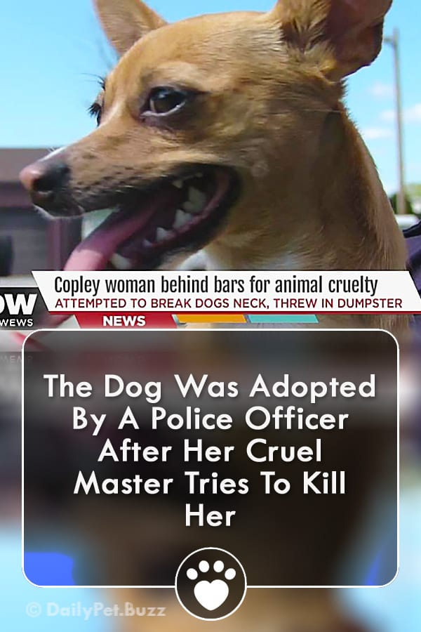 The Dog Was Adopted By A Police Officer After Her Cruel Master Tries To Kill Her